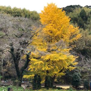 藤枝 滝ノ谷不動峡の秋