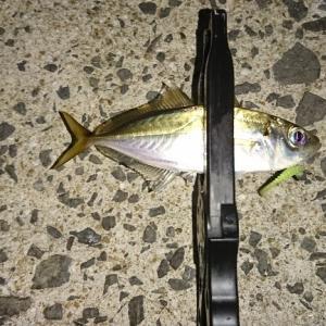 """はやっちゃん"""" 魚 """"を釣る*\(^o^)/*"""