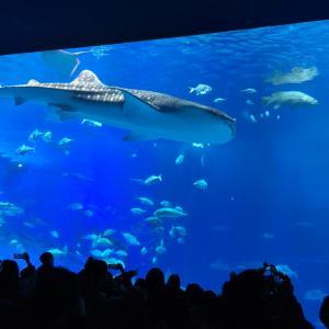沖縄美ら海水族館は…素晴らしい!!
