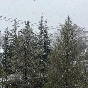 3月に人生お初の雪?!!
