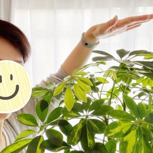 人生最長?!!癒される…観葉植物!