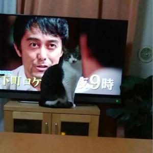 初の猫あるあるテレビ前
