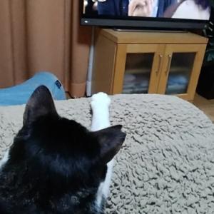猫が猫を観る