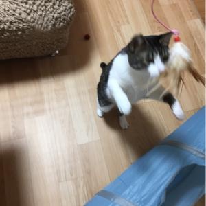 猫との遊び問題