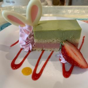 うさ耳が可愛い♡ピスタチオのケーキ!