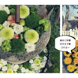 埼玉行田八幡宮で癌封じのお願いを~今年最後の花手水で癒される。