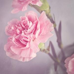 母の日には毎年花が咲く鉢植えを送りたい。多年草で人気は代表的なあの花?