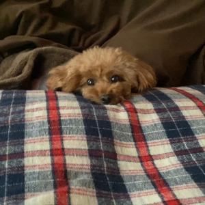 寒くてなかなか動かない犬