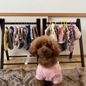 犬服用ハンガーラック