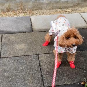雨対策してお散歩行こう
