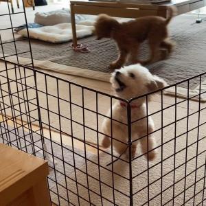 飼い主が2階に行くだけで