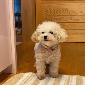 キッチンで狙う犬