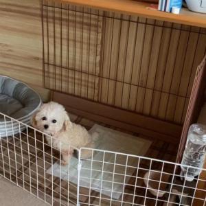 保護犬のトイレトレーニング