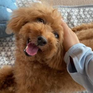 ママの帰宅に満面の笑みの元保護犬