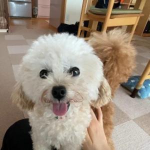 遠慮がちなアピールが健気で可愛い犬