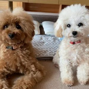 初めて保護犬を迎える人のための準備リスト