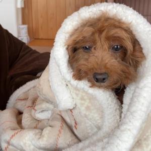 寒い日は毛布に包まれたい