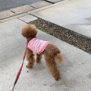 散歩に行けなくて残念そうにする犬