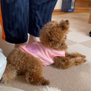 飼い主が出かけるのを阻止しようとする犬
