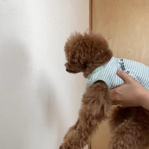 【検証】愛犬は賢い?賢くない?
