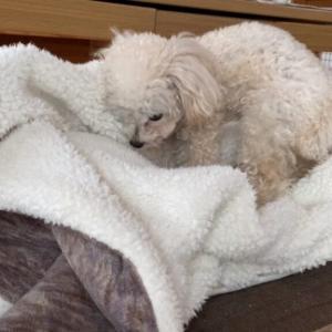 毛布を置くと、ホイホイされる犬