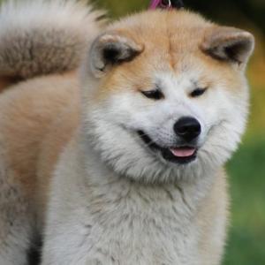 【忠犬】旅先で見つけたキャラクターまとめ21【仕事猫】