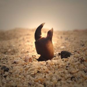 【龍にも蟹にも】旅先で見つけたキャラクターまとめ28【爪がある】