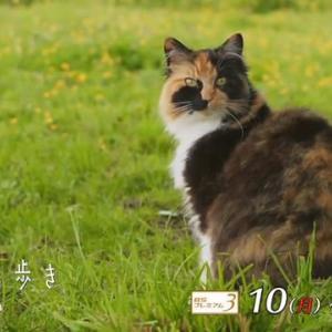 【悲報】NHK、BS1とプレミアムを統合へ