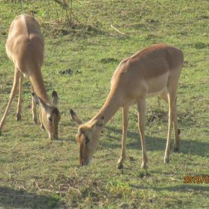 南アフリカ「クルーガー国立公園」で、セルフドライブサファリ