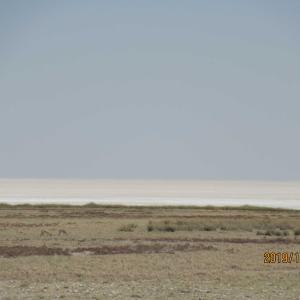 塩湖はボリビアのウユニだけじゃない!ナミビアのエトージャ塩湖