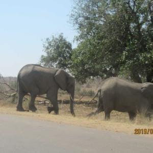南アフリカ、予約の宿の位置情報がデタラメ 宿に入れない