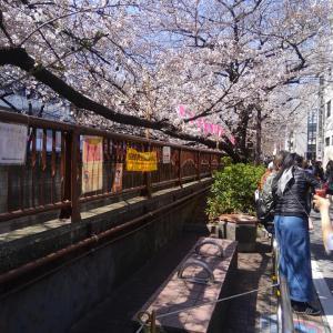 東京は、お花見の春(中目黒)