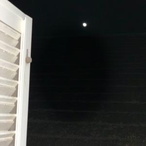 お月様が綺麗な日に雪アナを見ながら寝てしまった