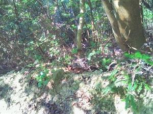 四国歩き遍路2巡目(第一部)4日目~蜘蛛蜘蛛ロードと先達犬。