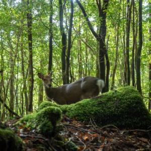 誘引捕獲で鹿6頭~3年目の猟期総括~
