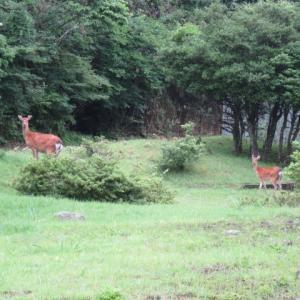 銃猟3回目 単独猟 4頭の鹿の群れに遇うも手を出さず見送る決断
