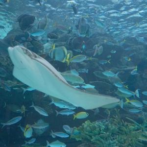 家族で名古屋港水族館へ!3密回避で楽しむコ&持ち物②