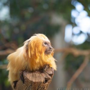 動物たちを近くに感じる動物園/チューリッヒ動物園