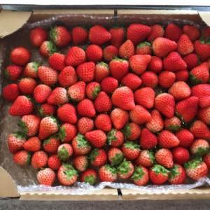 夏イチゴ届く
