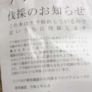 日頃の想い 9月編