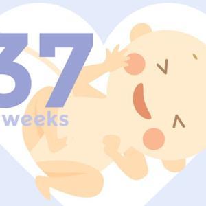 【37w0d】いつ産まれても大丈夫だよ!正期産に入りました!今日の検診記録。