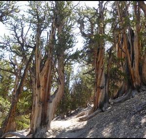 CA:Highway 395 (2):長い山歩き