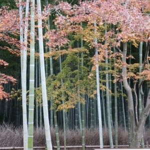 嵯峨野線沿線(5)天龍寺の竹林