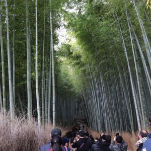 嵯峨野線沿線(4)嵐山・竹林の小径