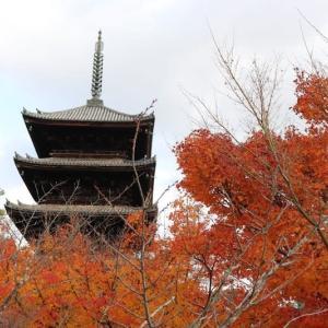北山(9)冬の御室桜