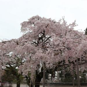 醍醐(2)三宝院