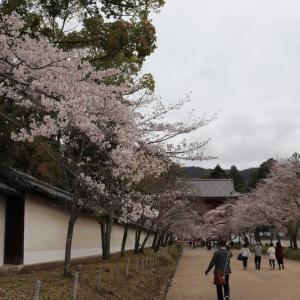 醍醐(4)桜馬場