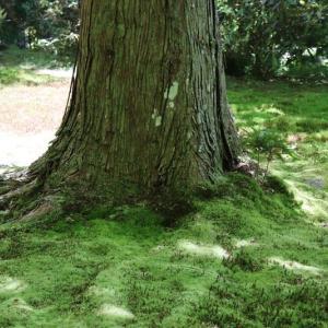 大原(5)苔の庭