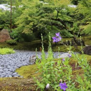 嵐山(13)宝厳院