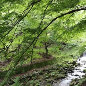 西濃(1)養老公園